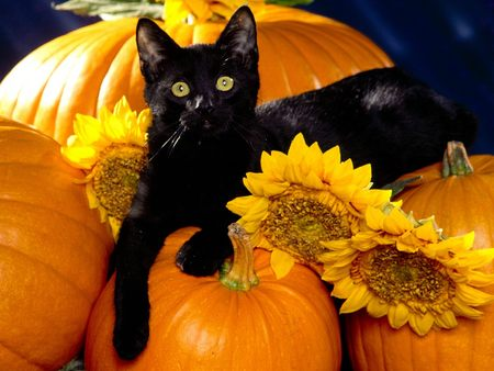 Halloween_Black-cat