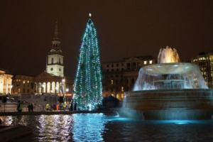Christmas tree on Trafalgar Square