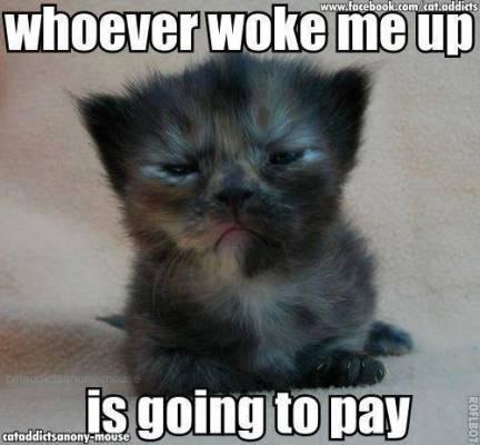 going-cat